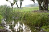Picturesque North Florida Marsh — Stock Photo