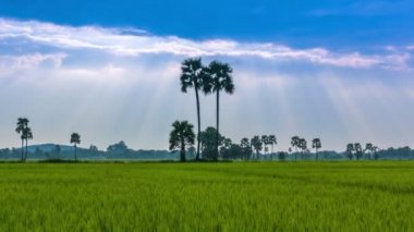 Rice Farm Landscape And Beautiful Sunbeam Time Lapse (zoom out) — Vídeo Stock