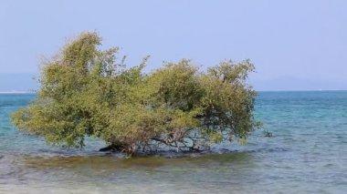 Alone Small Tree In Sea — Stock Video