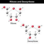 Estructuras de ribosa y desoxirribosa — Vector de stock