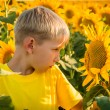 Childhood in the sunflowers — Stock Photo #70174699