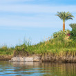 Nature of the river Nile in Egypt — Stock Photo #62297987