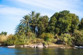 Nature of the river Nile in Egypt — Stock Photo