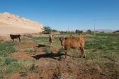 Desert in Egypt — Stock Photo