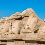 Karnak temple, Luxor, Egypt — Stock Photo #62455271
