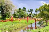 Surinam, Ameryka Południowa — Zdjęcie stockowe