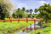 Suriname, américa del sur — Foto de Stock