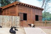 Zwierzęta w zoo w Madrycie — Zdjęcie stockowe