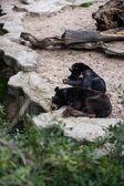 マドリッドの動物園の動物 — ストック写真