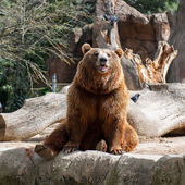 Animals in zoo in Madrid — Stock Photo