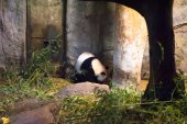 Animals in zoo in Madrid — Fotografia Stock