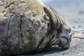 Head of a seal — Stock Photo