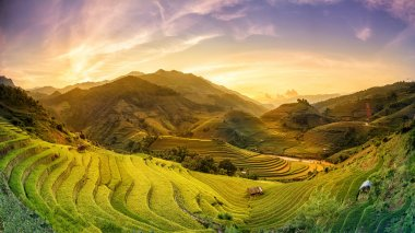 Rice fields on terraced in sunset at Mu chang chai, Yen bai, Vie