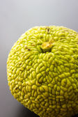 Monkey brain fruit — Foto Stock