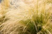 Téměř suché trávy — Stock fotografie