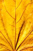 Textura de hoja otoñal — Foto de Stock