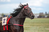 Horse racing — Stok fotoğraf
