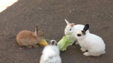 Rabbit eats corn — Stock Video