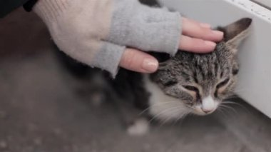Little cat outside sitting — Stock Video