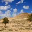 Negev Desert . Mountain  Avdat with antic  Nabatean city — Stock Photo #66682267