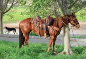 Horse tethered under the trees — Stock Photo