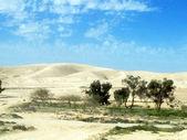 Negev desert at the spring on blue sky background — Stock Photo