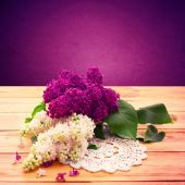 Flower isolated lilac branch . — Stock Photo