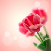 Red tulips flowers isolated on beautiful background. — Stock Photo