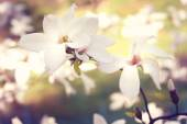 Spring. Magnolia flowers. — 图库照片