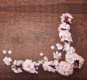 Wedding background. Flowering branch of cherry — Stock Photo