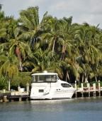 Yacht near lush foliage — Stock Photo