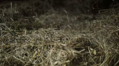 Dust in the hayloft — Stock Video