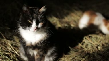 Cats in the hay — Stock Video