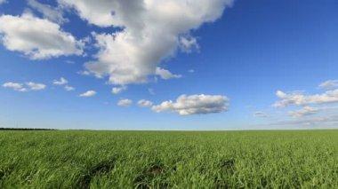 Groen veld en de blauwe hemel — Stockvideo
