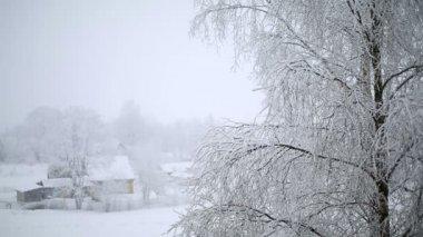 Snöfall träd — Stockvideo