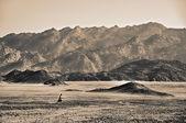 砂漠 — ストック写真