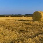 Freshly harvested round hay bales — Stock Photo #56492495