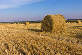 Round hay bales in an agricultural field — Stock Photo