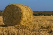 Round golden hay bale in a field — Stock Photo