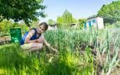 Bir sebze bahçesinde çekici genç kız — Stok fotoğraf