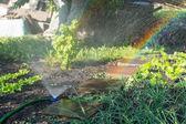 Irrigation sprinkler in a garden with vegetables — Stock Photo