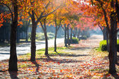 Road in autumn — Stock Photo