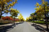 Road in autumn — Stock Photo