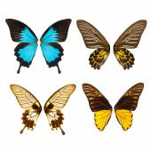 Butterfly wings — Stock Photo