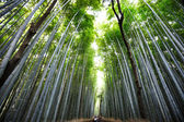 Arashiyama — Stock Photo