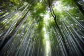 嵐山 — ストック写真