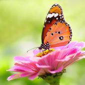 Butterflys — Stock fotografie