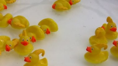 Toy ducks floating in water — Stock Video