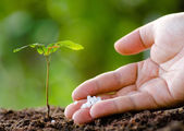 Male hand giving plant fertilizer to young tree — Stock Photo