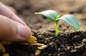 Sprout growing on back soil with seed on hand — Stock Photo